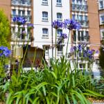 Agapanthus at Kensington Close Hotel