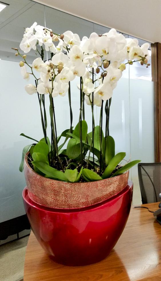 McQueen-Orchids