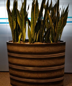 Office Plants - Ascot Underwriting