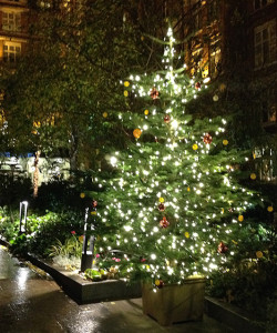 Christmas trees at St Ermin's Hotel