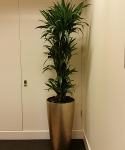 Plant display - Sumitomo Corp. London