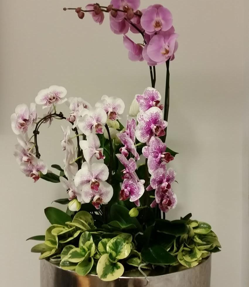 Plant display - Sumitomo Corp. London