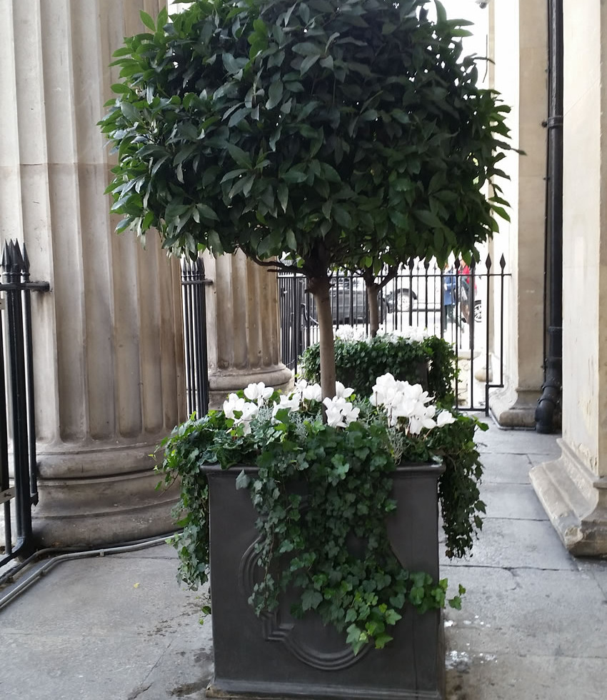 Covent garden plants diary interior exterior plant for Garden trees london